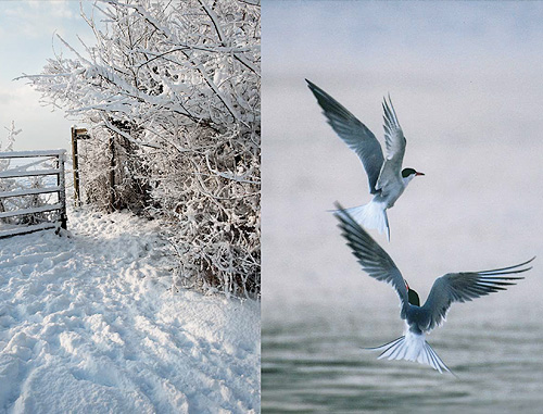 Terns & Gate Card - Pack of 10 Christmas Card